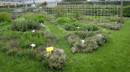 herbes_aromatiques_LCAV