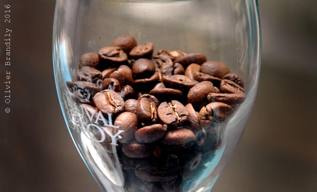 Arbre-a-cafe2