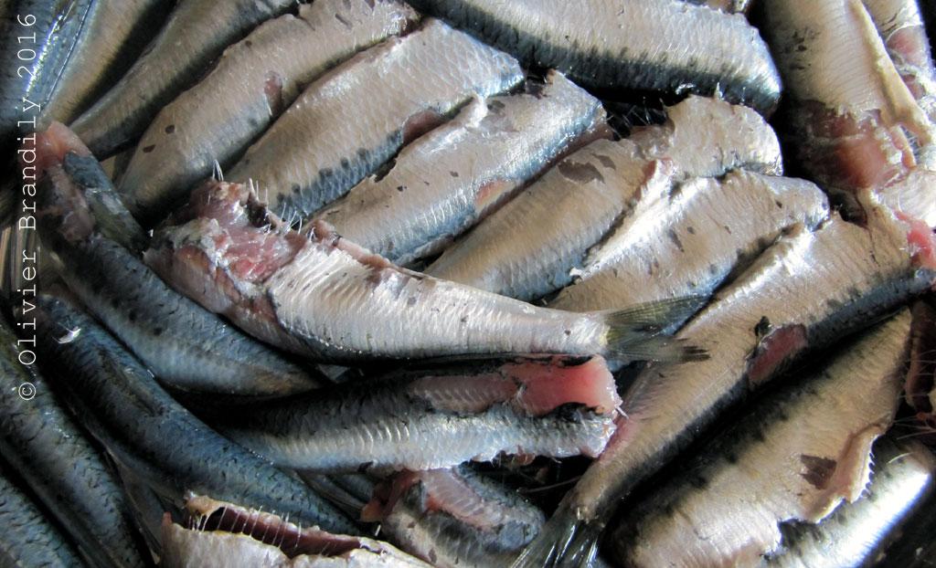 SardinesLCAV2