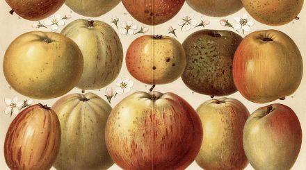 Fruit-livre