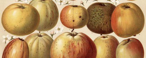 Le geste du fruit