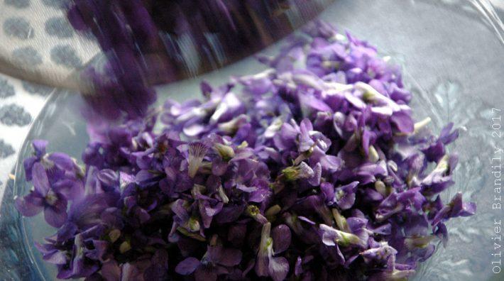Sirop de violette pascal