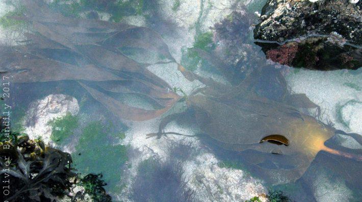Algues : la nouvelle vague