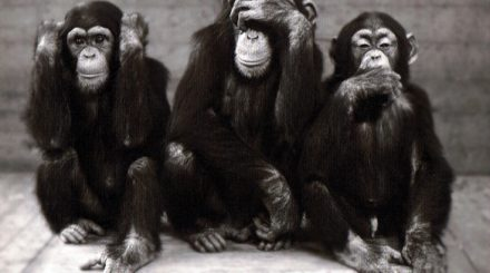Les-3-singes-LCAV